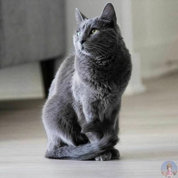 Когда кошка прирожденная модель