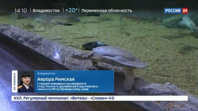 Новости на Россия 24 • Очередная смерть в Приморском океанариуме умерла белуха Маруся