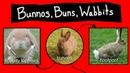 Bunnos Buns Wabbits Internet Names for Bunnies