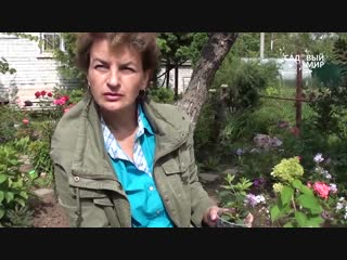 Садовые гортензии  - garden