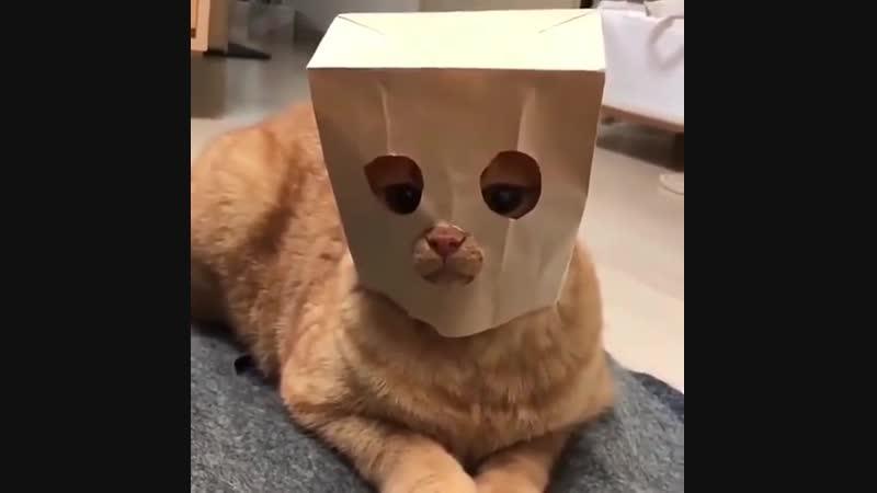 сап двач есть одна кiшка...