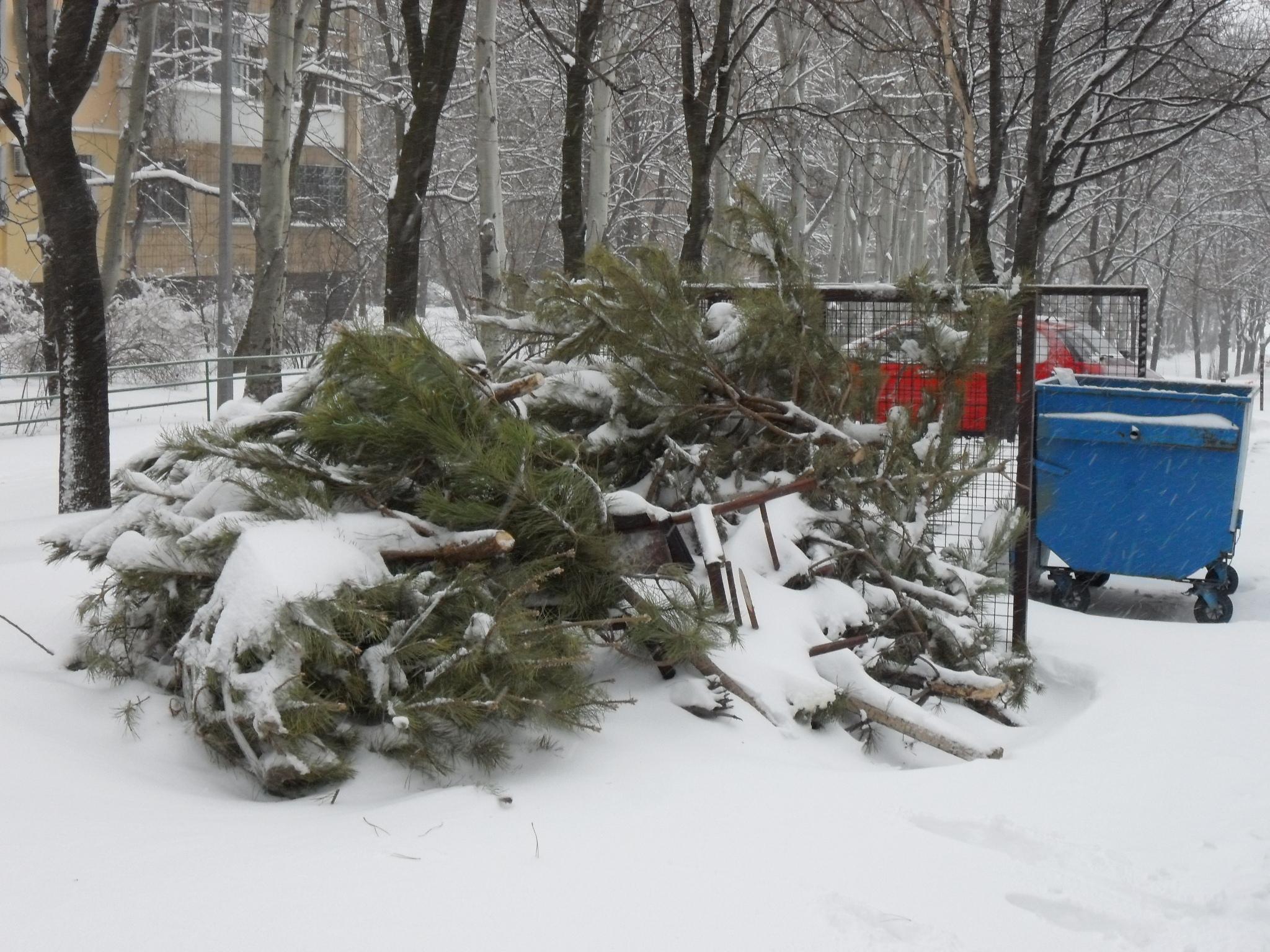 В Мариуполе использованные елки переработают в щепу