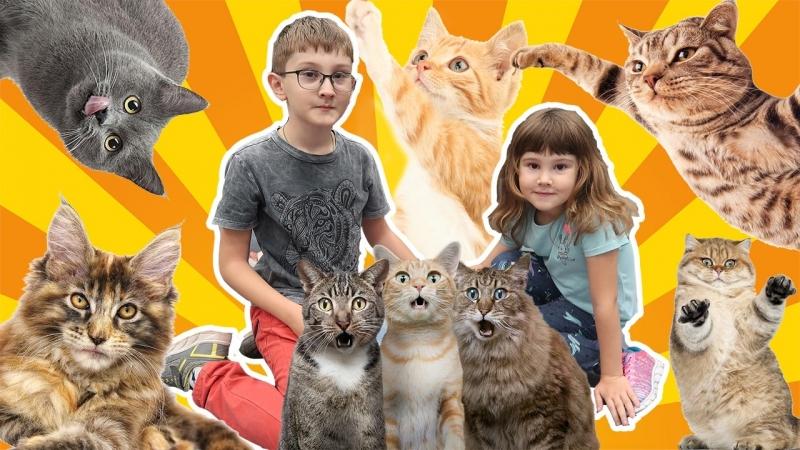 🔔ВНИМАНИЕ самое МИЛОЕ 💟 видео в МИРЕ🐱КОШКИН ДОМ | ПАРК СОКОЛЬНИКИ Видео для детей