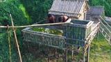 Build Beautiful Bamboo Fish Pond on The Bamboo Vila