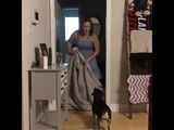Dog Reunites with Soldier Dad During What The Fluff Challenge - 995743