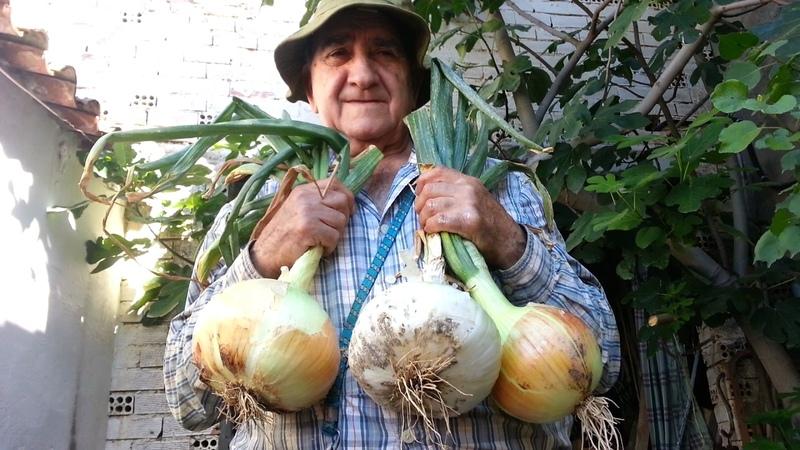 El huerto de Isidro 12. Cebollas