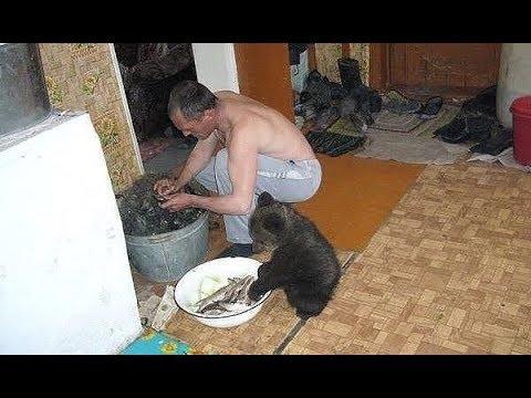 Русские настолько суровы что медведи вынуждены помогать им по хозяйству также заморские мишки