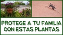 PROTEGE A TU FAMILIA SEMBRANDO ESTAS PLANTAS EN TU HOGAR