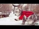 Приколы с котами собаками и другими животными 39 Jokes with cats dogs and other animals