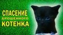 спасение котенка котят животных кошка котики котята бездомный котенок подобрали котенка как выкормить котенка приколы с котами смешные коты красивые слепой котенок мяуканьемяуканье котенкаживотныеприколы с животнымипомощь животным домашние нашли на улице