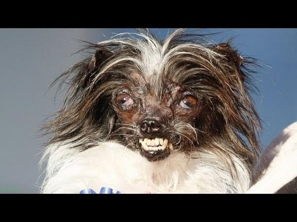 Самые некрасивые и уродливые собаки в мире!