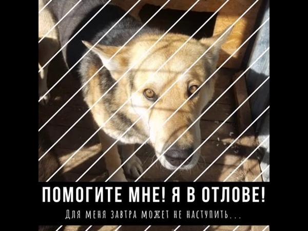 Отлов! Г. Петрозаводск. 2018г би-2 волки