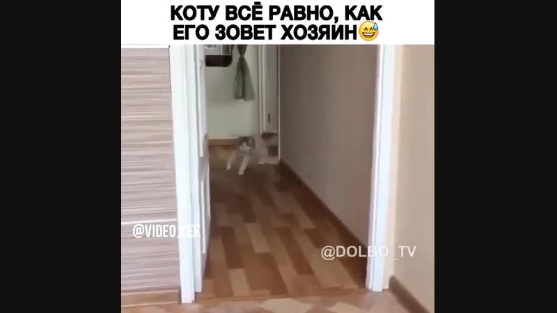 Коту все ровно, как его зовет хозяин