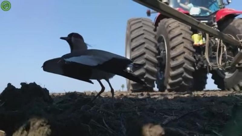 Большой герой для маленькой птички