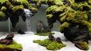 Hồ thủy sinh siêu trong 36x22x26 Thác cát Minifiss