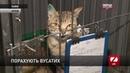 У Львові шукають волонтерів, які порахують безпритульних котів