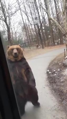 Everybody gansta till bear starts walkin · coub, коуб