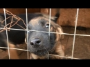 Жизнь собак в отлове