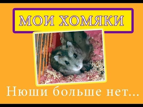 Хомяка Нюши больше нет / Пополнение в семье хомячков