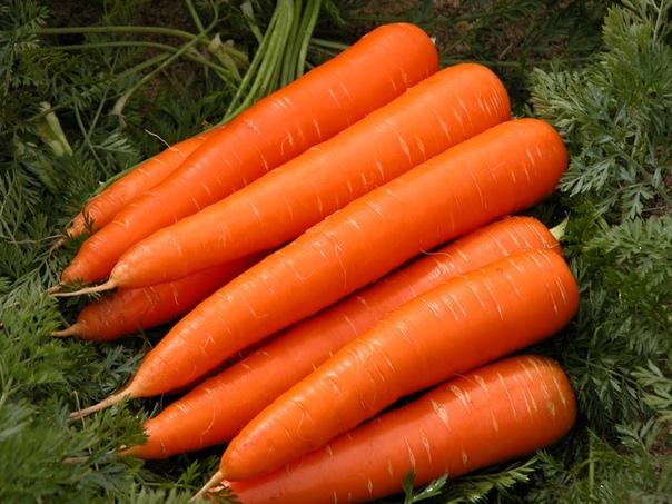 лучшие способы повысить всхожесть моркови. как влияет срок годности семян на урожайность всхожесть семян важная характеристика, показывающая, сколько именно из посеянной моркови удастся