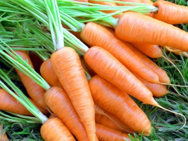 Как увеличить урожайность моркови Нужно ли замачивать семена перед посадкой