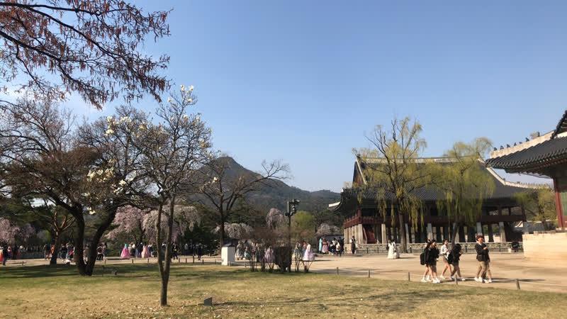 Весна во дворце Кёнбоккун VisitKorea