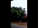 Дорога из Маяпура в Калькутту 1 20161024