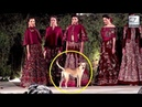 A Street Dog Enters Rohit Bal's Fashion Show And Steals The Limelight | LehrenTV