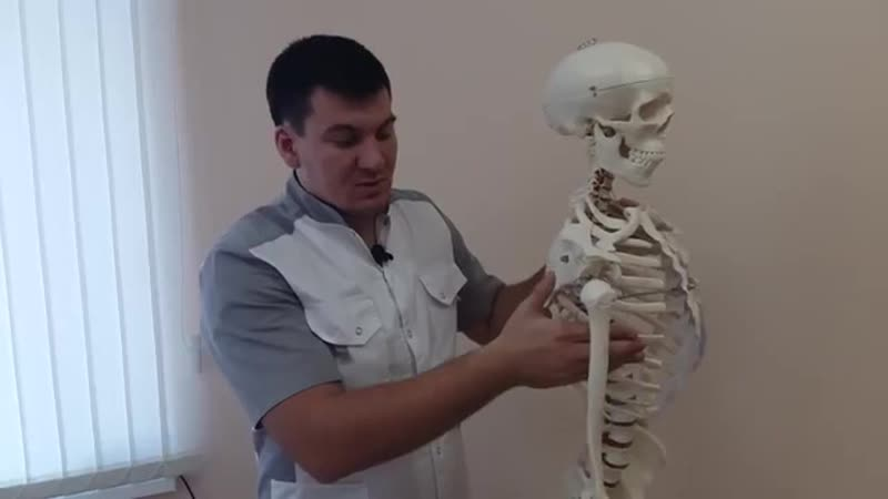 Упражнения при плечелопаточном перериартрозе Подключичная зубчатая