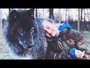 Беспородный пёс, похожий на волка, спас девушку... И вот как она его за это отблагодарила...