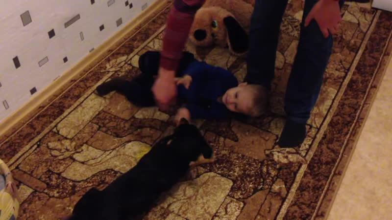 Веселая игра ребенка и собачки 2