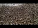 Пляжи пустые,а море тёплое,20-22 градуса,Ялта,8ч.20мин. 03.10.18.