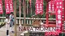 NARA CITY JAPAN SIKA DEER AND MORE NARA 2018