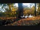 Золотая осень на Мазурском канале