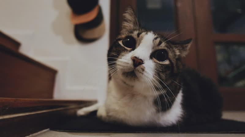 Котейка Cat