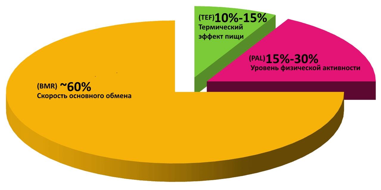 Общий ежедневный расход энергии (TDEE)