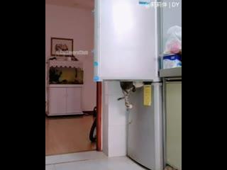 коты открывают холодильник