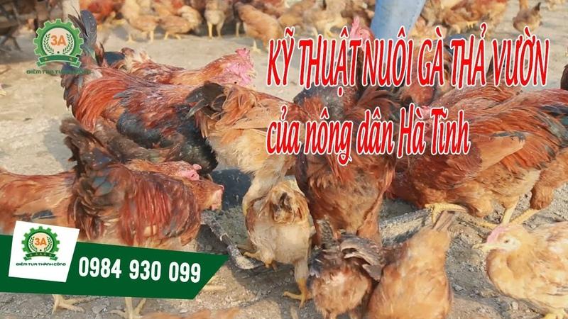 KỸ THUẬT NUÔI GÀ THẢ VƯỜN của nông dân Hà Tĩnh || Máy xay nghiền cua ốc 3A3Kw