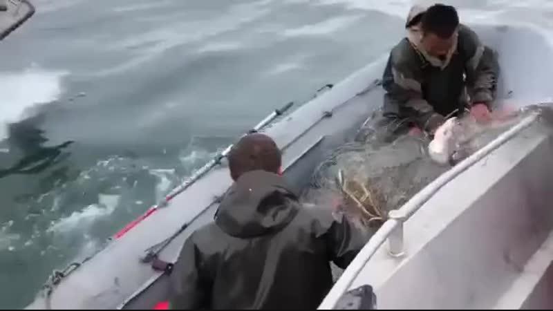 Береговая охрана щемит браконьеров Видео прикол