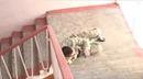 Kadochnikov system. Slip on the stairs coub