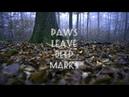 Talechka lastochka paws leave deep marks