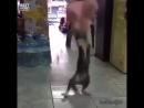 Кот борца