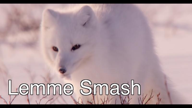 Lemme Smash - Fox Edition (Where's Helen?)