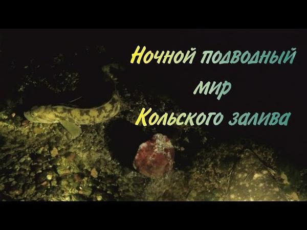 Ночной подводный мир Кольского залива / Night Kola Bay