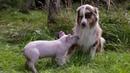 Удивительные случаи взаимопомощи и дружбы животных.