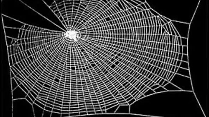 * Эксперимент ученые давали пауку разные виды наркотиков...И вот, что случилось...