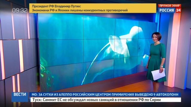 Новости на Россия 24 • Памела Андерсон приехала собирать деньги на спасение белух