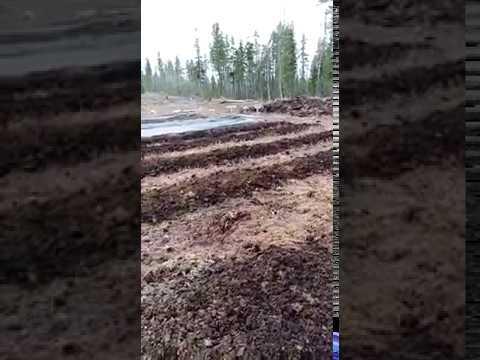 Подготовка гряд на клюквенной плантации в Ханты Мансийске, 2019 2019г