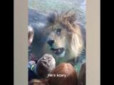 Дети и дикие животные. Как же они похожи