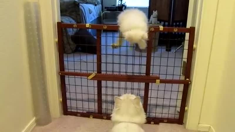 Mama cat encourages her kitten to escape